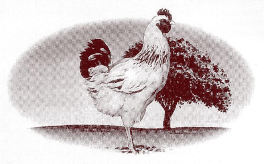 Le poulet du Bourbonnais.