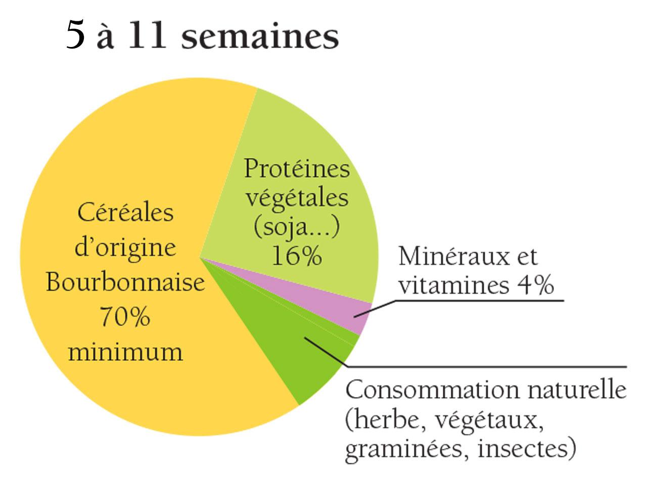 élevage du poulet du Bourbonnais de la 5ème à la 11ème semaine